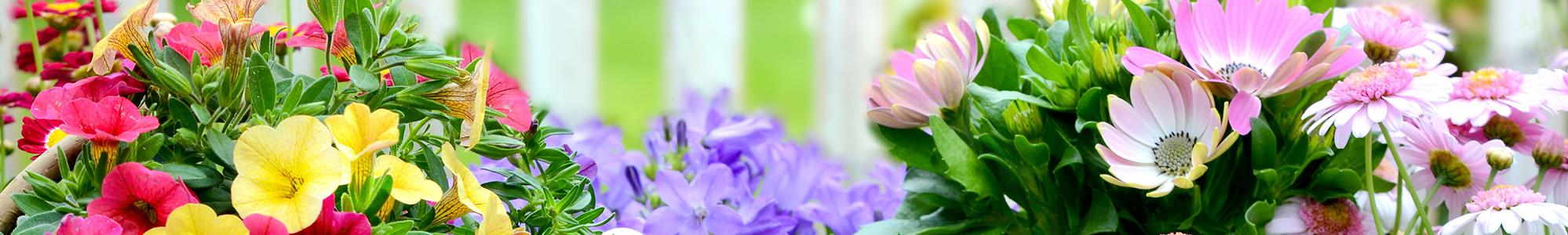 Abbildung bunte Blumen